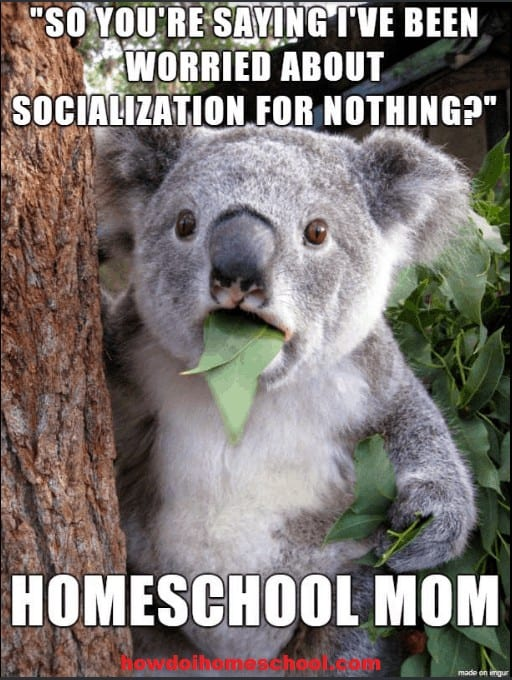 So you're saying I've been worried about socialization for nothing? Homeschool mom. #homeschoolmeme
