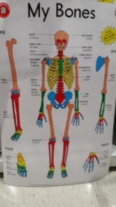 A colorful portrayal of the human body inspires anatomy and physiology study in your homeschool room.